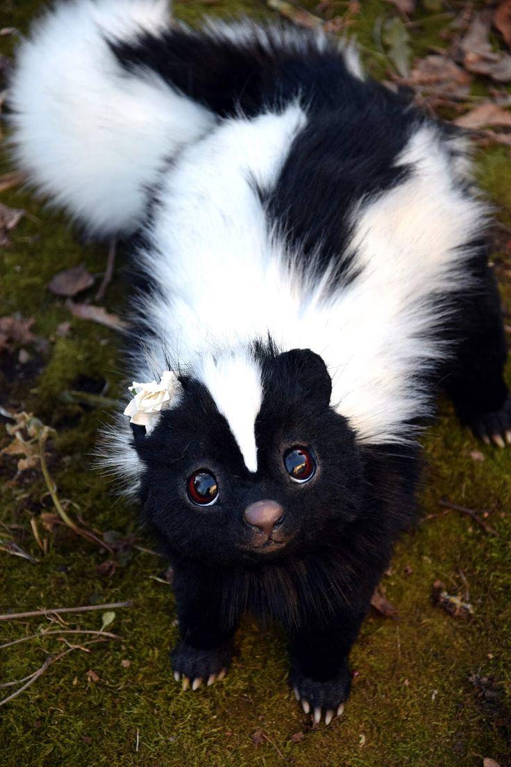 Skunk Süße tiere, Babytiere und Tierbilder