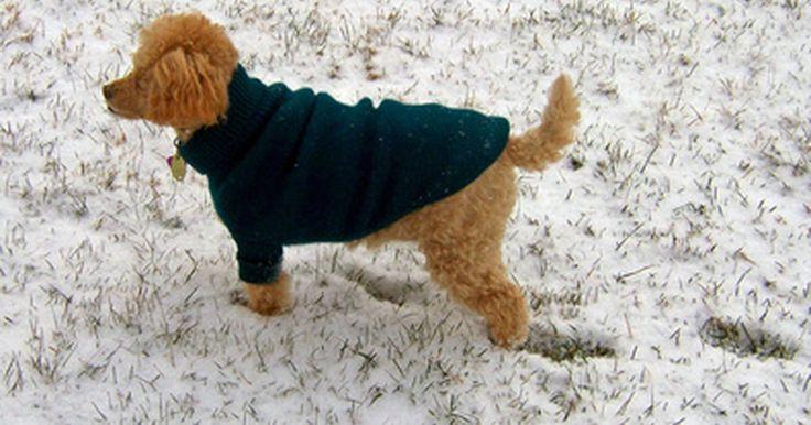 Cómo tejer un suéter para perro. Tanto los perros pequeños como los grandes sienten el frío de la nieve invernal o la neblina de otoño y primavera. Ejercita tus habilidades para hacer manualidades tejiendo un suéter para tu perro. Para tejer uno, debes saber cómo realizar el punto derecho y el punto revés. También deberías saber cómo colocar los puntos, cerrarlos, aumentarlos y ...