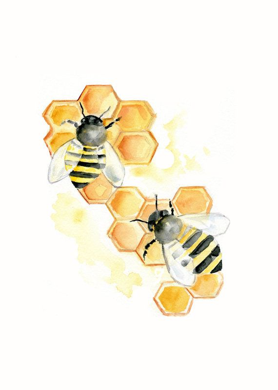 Bees on Honeycomb Watercolor print 5 X 7inch by Marysflowergarden, $8.00