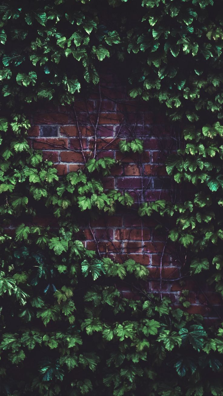 Misc leaves brickwall plant wallpapers hd 4k