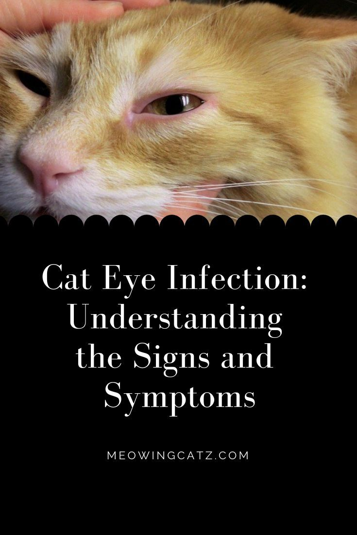 Cat Care Tips Cat Eye Infection Cat Care Cat Eye Discharge