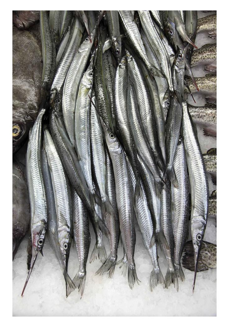 Fresh Fish @ Sydney Fish Markets Pyrmont  #sydneyfishmarkets #sydneycommunity #fishing