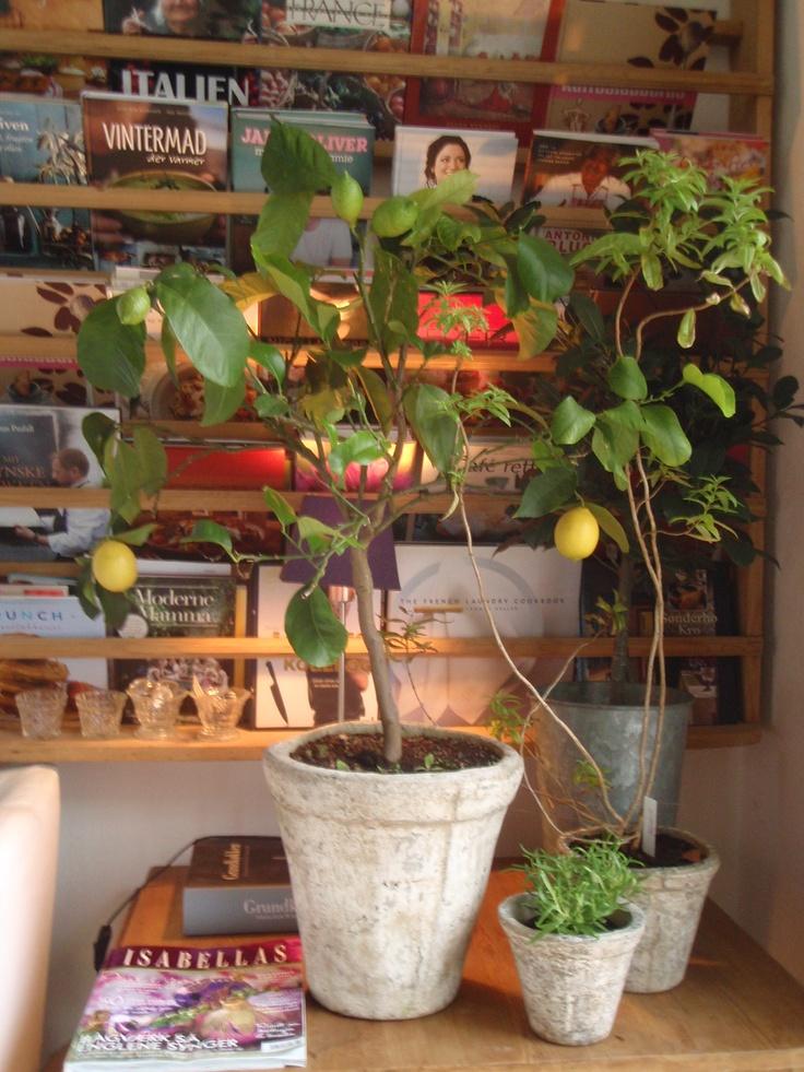 The Mediterranean corner of my Danish kitchen
