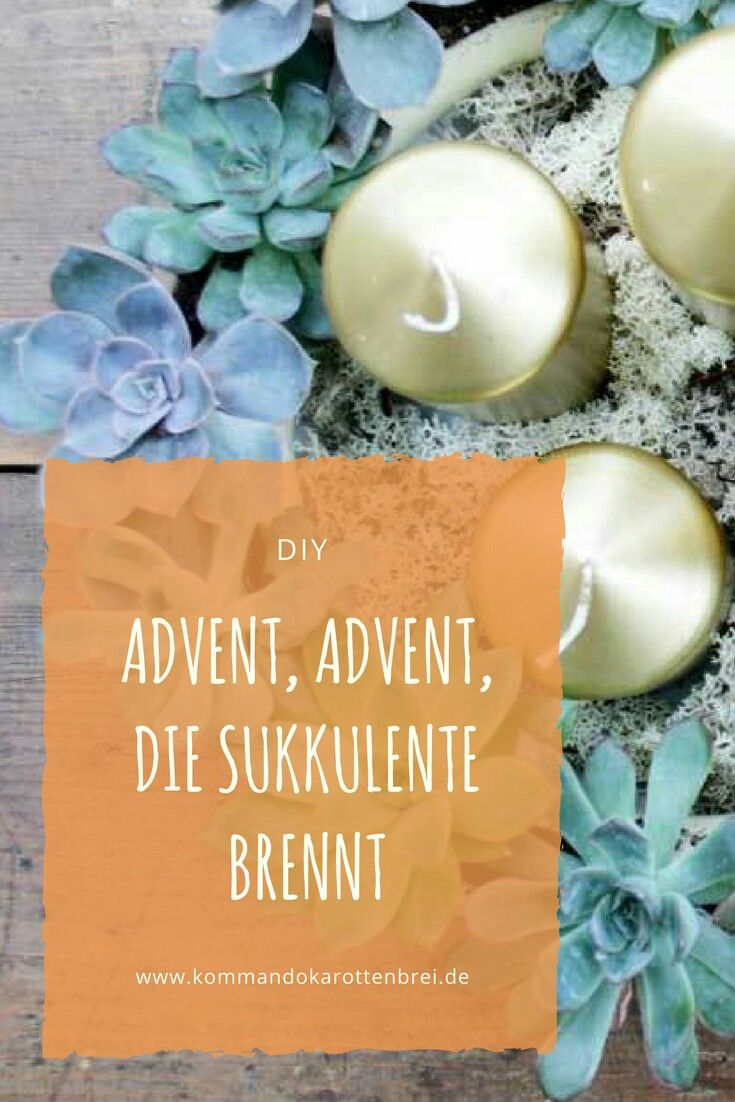 Immergrüner #Adventskranz gefällig? So bindest Du einen #Kranz aus #Sukkulenten. #diy #Weihnachten #floristik #Advent #christmas #crafts #floral