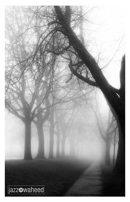Montreal Fog #5