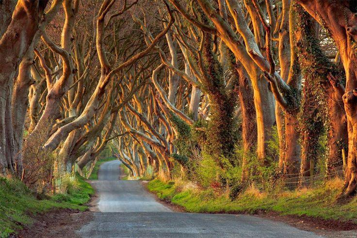 Beautifully Tree Lined Road, Ireland By Przemyslaw Zdrojewski