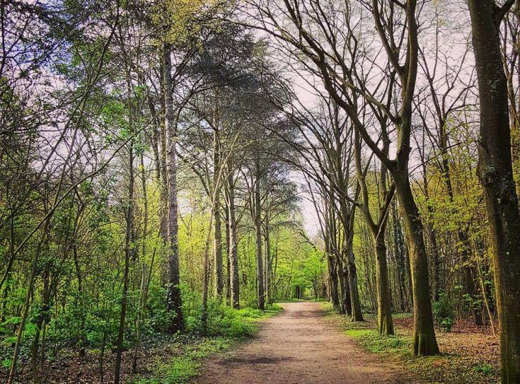 Voie Bois de Boulogne