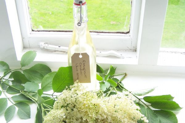 Elderflower Cordial - the flowers are out so be sure to make plenty of cordial while you can