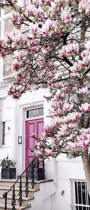 Notting Hill...I luv red doors and magnolias (though they are the messiest trees).