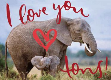 Help Save Elephants by giving this NRDC Green Gift https://www.nrdcgreengifts.org/i-love-you-tons
