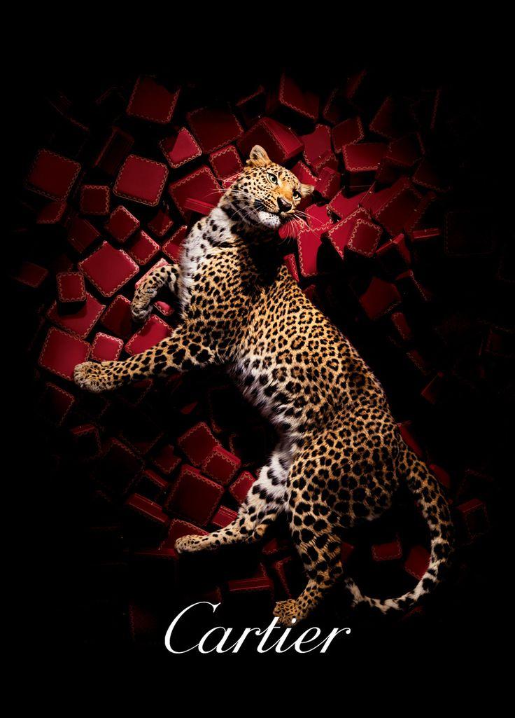 Ali Mahdavi Photography - ADVERTISING | Cartier