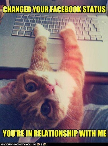 facebookin kitty: Cats, Kitten, Animals, Pet, Funny, Crazy Cat, Kitty, Cat Lady