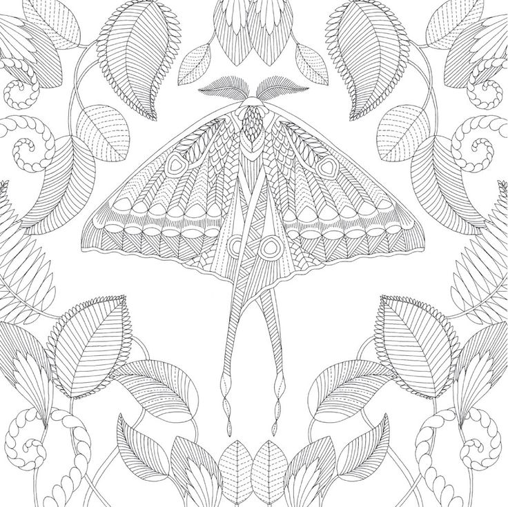 Millie Marotta Tropical Wonderland Moth Coloring Millie Marotta Tropical Wonderland Butterfly Coloring Page Millie Marotta Tropical