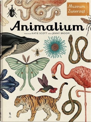 Animalium - Broom, Scott #chcę
