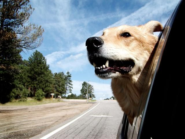 Pet taxi services coordinate the transportation of pets to grooming or vet appointments. Learn how you can provide this valuable service.