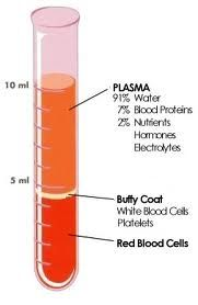 blood composition - Google Search
