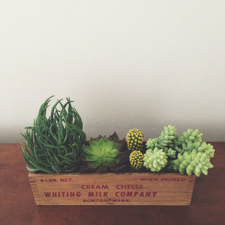 Succulents in a box...center piece