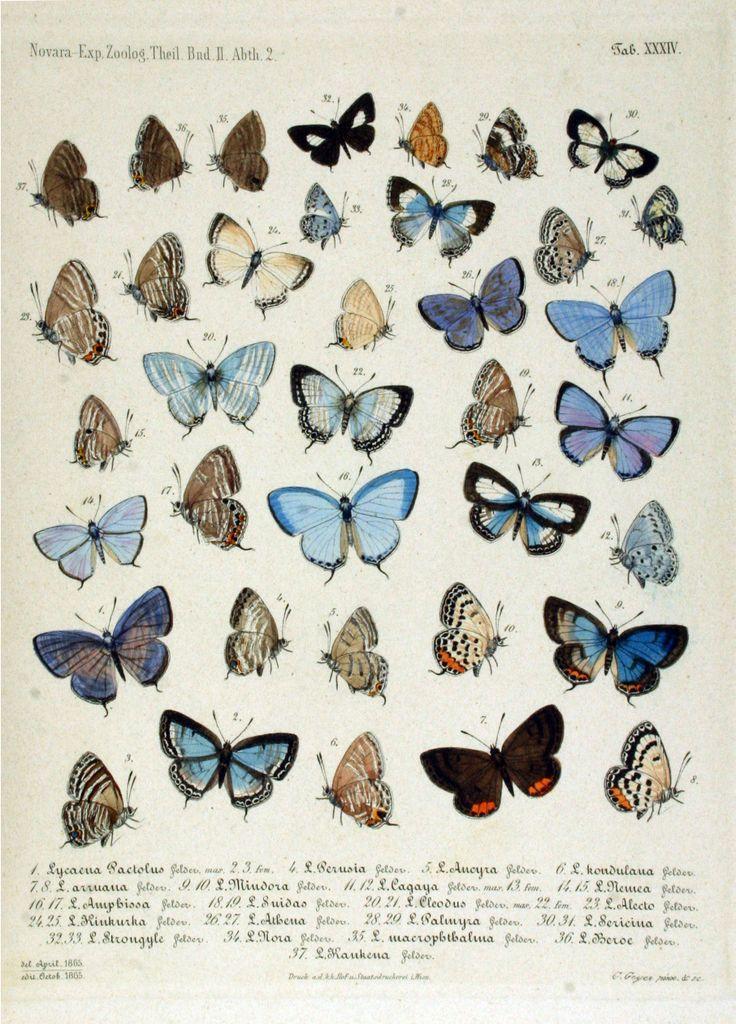Free printable - vintage butterflies