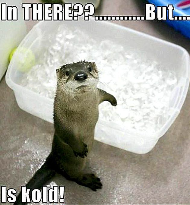 ♥ Otters are so cute.