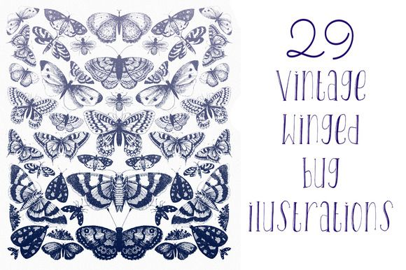 Vintage Winged Bugs by amaarawhite on Creative Market