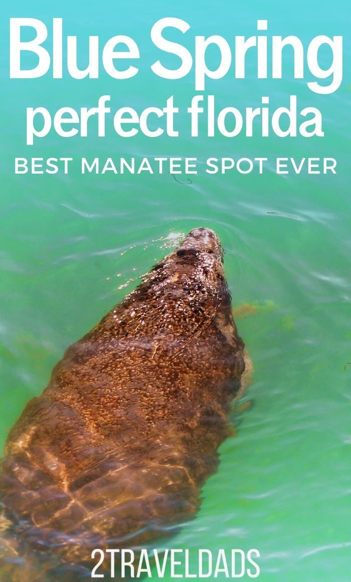 Best Manatee Encounters At Florida S Fantastic Blue Spring State Park Blue Springs State Park Blue Springs State Parks