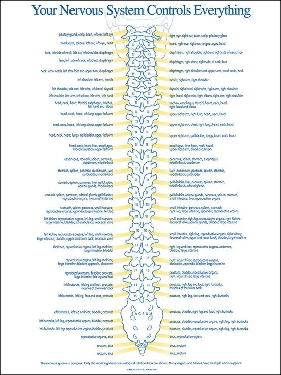 Nervous System- if ppl only knew, this is the cure for the future!!!! Educate yourself and you can do wonders >3
