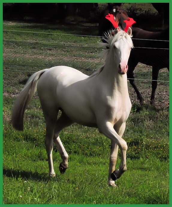 Miss Pink wearing her Xmas antlers