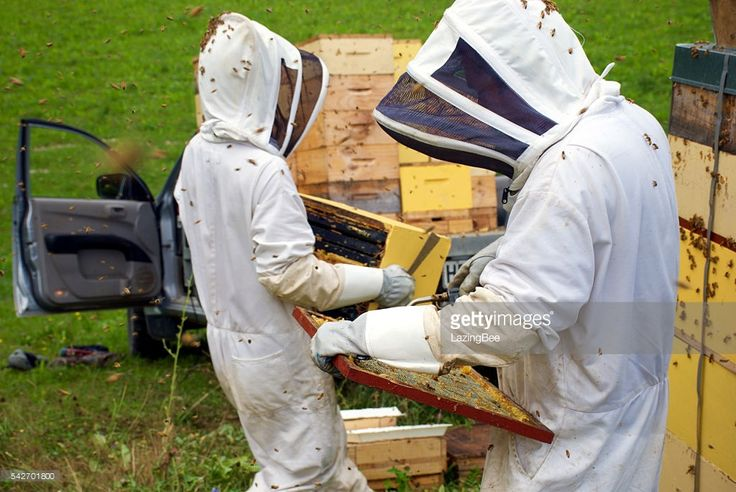 Commercial Beekeepers working on their Beehives.