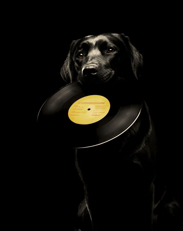 Vinyles Passion ou la Haute Fidélité - www.remix-numerisation.fr - Rendez vos souvenirs durables ! - Sauvegarde - Transfert - Copie - Digitalisation - Restauration de bande magnétique Audio - MiniDisc - Cassette Audio et Cassette VHS - VHSC - SVHSC - Video8 - Hi8 - Digital8 - MiniDv - Laserdisc - Bobine fil d'acier - Micro-cassette - Digitalisation audio - Elcaset