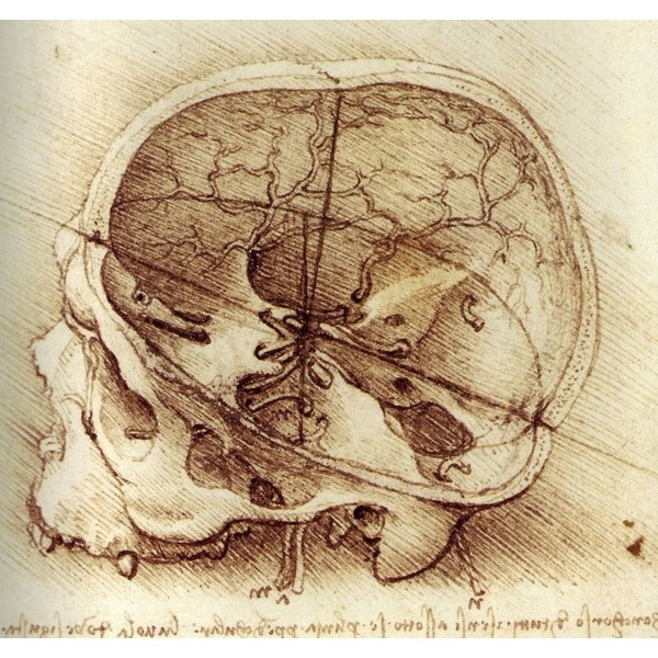 Leonardo Da Vinci's anatomy drawing found on Polyvore