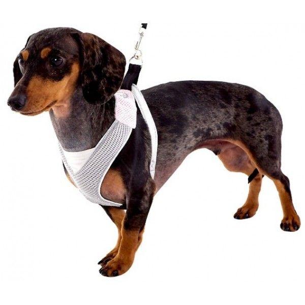 Bezpečnostní postroj pro psy S čevený