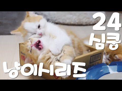 심쿵주의! 재미있는 고양이 시리즈 24 - 재미있는 웃긴 황당한 귀여운 고양이 반려동물 동영상 모음