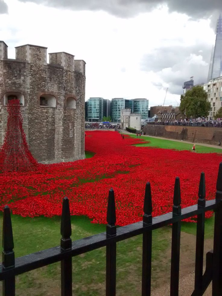 Poppies August 2014