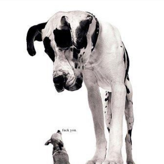 !!!: Great Danes, Animals, Dogs, Quotes, Stuff, Pet, Funny, Things