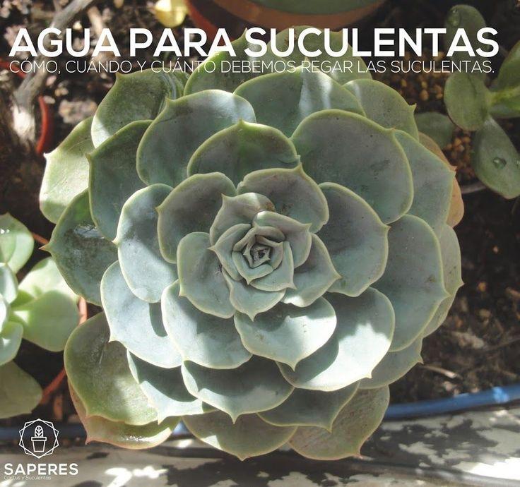 El riego de las plantas suculentas | Plantas