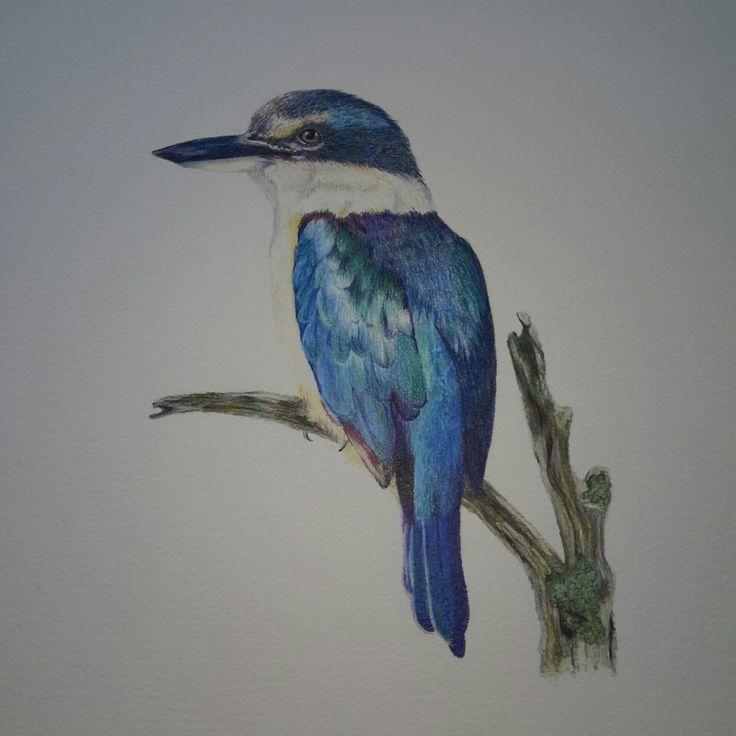 New Zealand Kingfisher or Kotare using coloured pencils bird art by @kristin.ivill.art