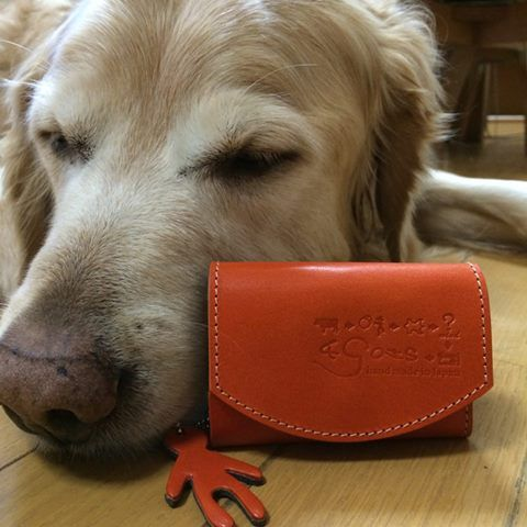 このポキートはうちの犬の散歩の時に使いたいので犬と一緒の写真を送ります。 クアトロガッツさんは猫派なのに実にすみません…。 会社の制服のポケットにもちょうど良さそうなので、お小遣い貯めてまた注文したいです。 その時はぜひよろしくお願いします。 この度はありがとうございました。 --------- Reina