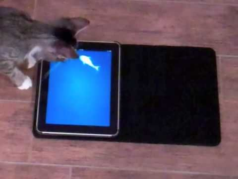 I was wondering how to keep the cats busy: You vs. Cat: New iPad Game Pits Humans Against Felines