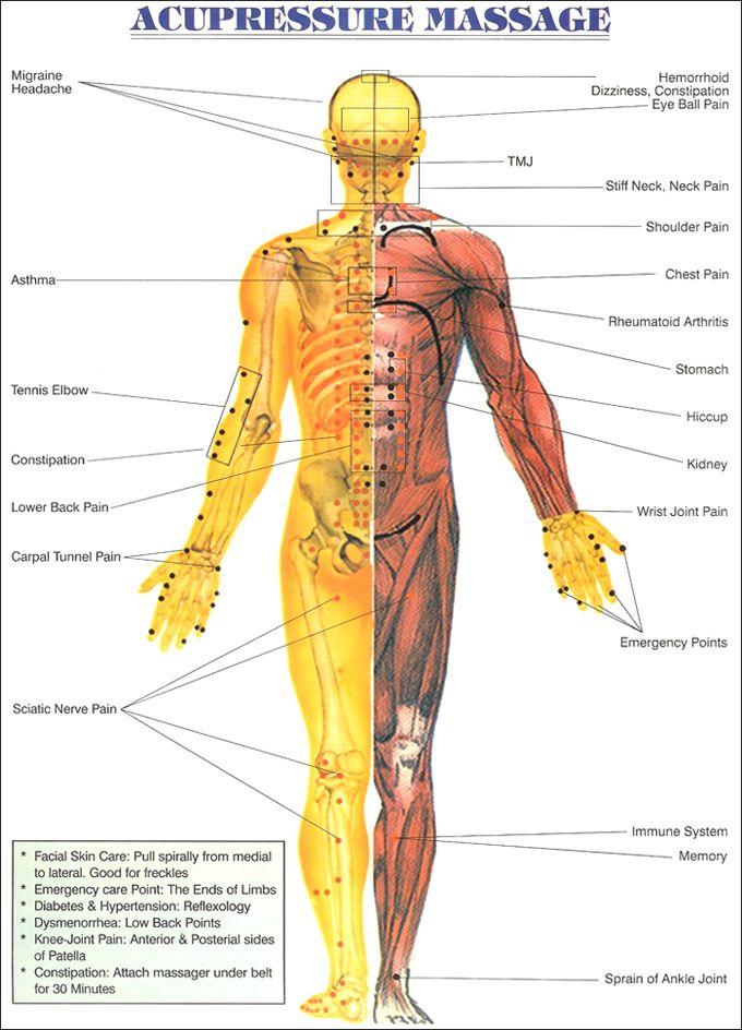 Pressure Points Diagram Massage Wiring Diagram