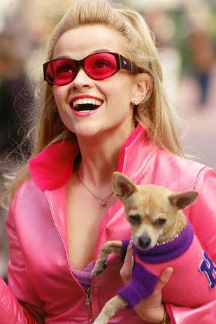 "Here's What The Cast Of ""Legally Blonde"" Looks Like Now"