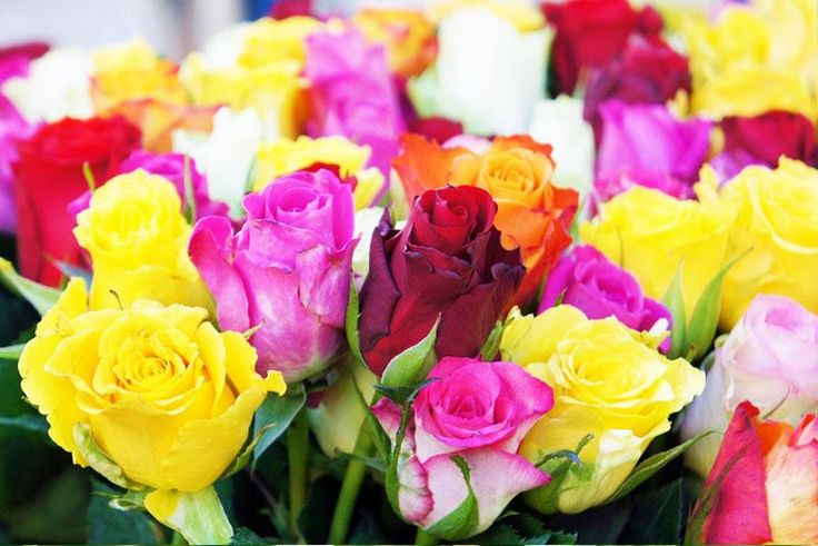 June - As summer begins, no bloom better signifies the beauty and sweetness of the dawn of the new season than June's birth flower, the rose. Available in more than 100 species, the rose is a symbol of devotion and love.