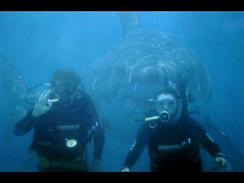 Megalodon Shark Caught On Tape ● 60 ft.