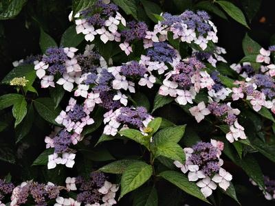 12 Best Foundation Plants Front Of House View 1 Images On