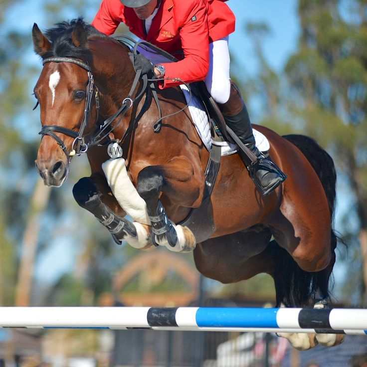 My favorite show jumping picture!