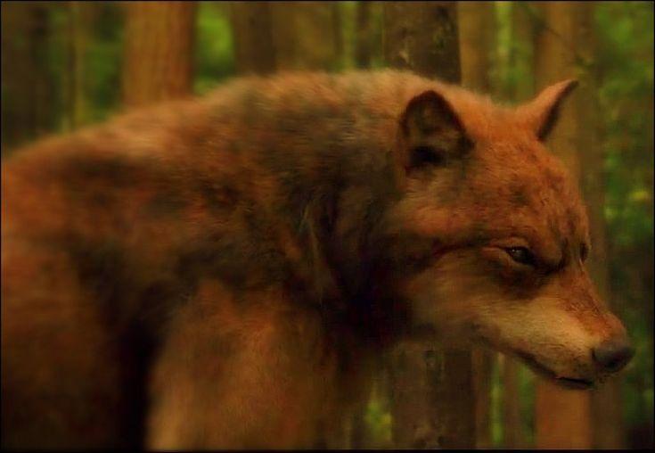 Werewolf Twilight Pack twilight wolves | Twil...