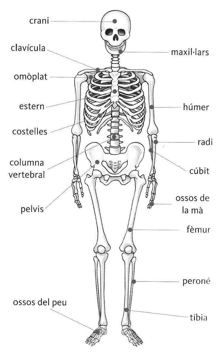 esquelet amb noms