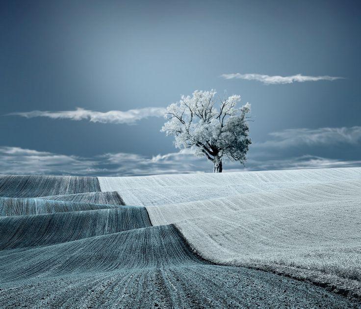 photo: Worm blanket of nature | photographer: Caras Ionut | WWW.PHOTODOM.COM