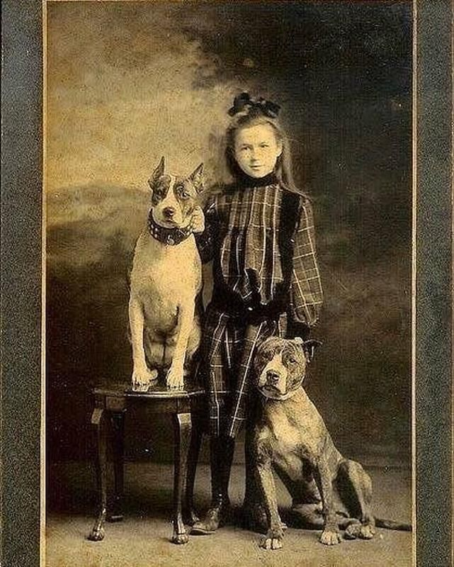 60 Vintage Photos From Forgotten Moments In History Vintage Dog