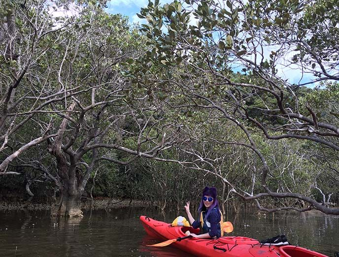contiki vacations young traveler tours, mangrove trees paihia, bay of islands kayaking, coastal kayaks new zealand. More of this eco travel adventure tourism at http://www.lacarmina.com/blog/2016/06/paihia-new-zealand-nature-tours-kayak-sailing/