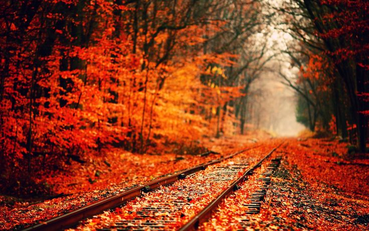 fall nature backgrounds. Fall Wallpaper | Nature Pinterest Happy Fall, Background Images And Hd Backgrounds